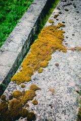 Mousse sur un mur en béton