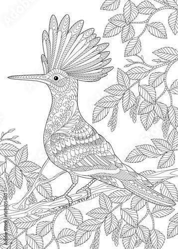 Coloring page of hoopoe bird (Upupa epops) sitting on birch tree ...