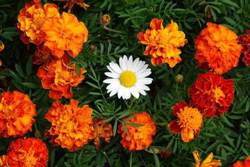 A beautiful bouquet of garden festive flowers.