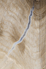 Petrified wood grain patterns, macro