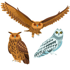 Canvas Prints Owls cartoon Owls on white background / Three are three poses of owls in cartoon style