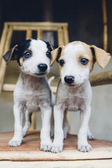 Two Puppies Standing Together