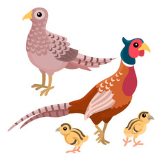 Family of pheasants on the white background / Two adult pheasants with their chickens in cartoon style