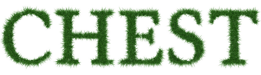 Chest - 3D rendering fresh Grass letters isolated on whhite background.