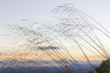 Early Autumn Grass in Blue Ridge Mountains