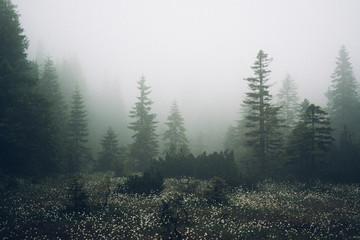 Krkonoše woods