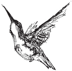 Vector illustration of a hummingbird in pen and ink style