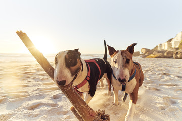 A dogs life, Sand sticks and sea.