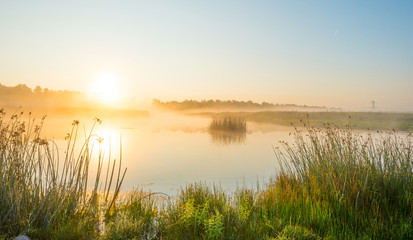 Foto op Plexiglas Meer / Vijver Shore of a misty lake at sunrise in summer