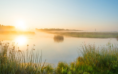 Fotorolgordijn Meer / Vijver Shore of a misty lake at sunrise in summer