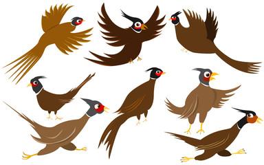 Pheasant game birds vector Illustration