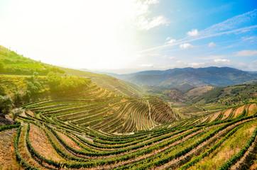 Weinterrassen mit Weinbergen bei Peso da Regua, Rio Douro Portugal