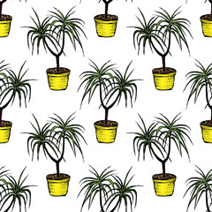 House Plants - Dragon Tree - color seamless pattern