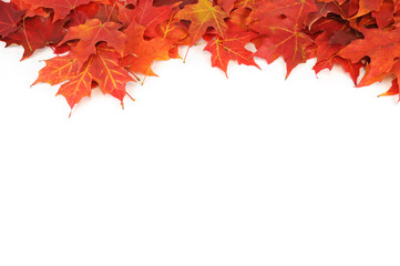 colorful autumn maple leaves frame isolated on white background