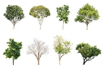 trees  isolated white background collection set