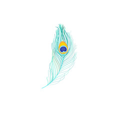 Vector icon of peacock feather
