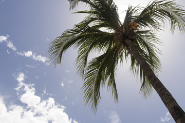 Nice photography of a coconut palm tree from bellow.