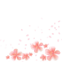 Flying Pink Sakura flowers and petals isolated on White background. Apple-tree flowers. Cherry blossom. Vector