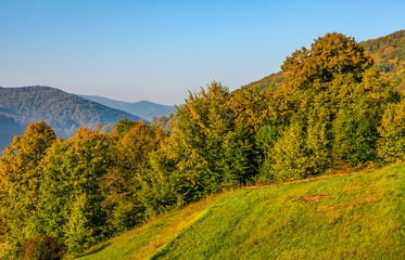 forest on hillside meadow at sunrise. beautiful scenery in early autumn