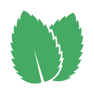 Two peppermint / spearmint mint or mentha leaves flat vector color icon for apps and websites