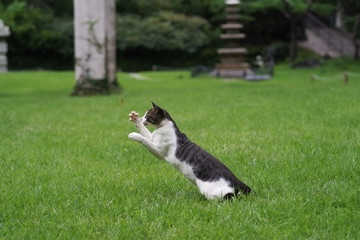 hunter street cat