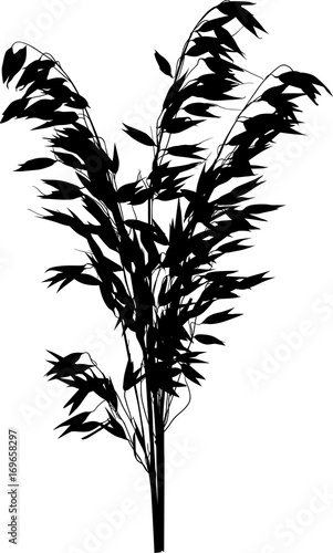 Black Silhouette Of Isolated Oat Bunch Stock Image And Royalty Free