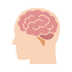 Brain or mind side view inside head flat vector color icon for medical apps and websites