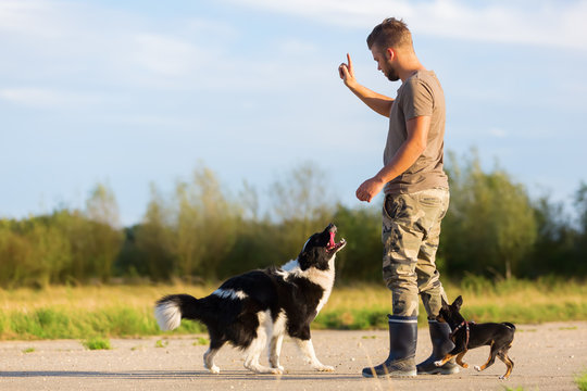 man trains with two dogs outdoors