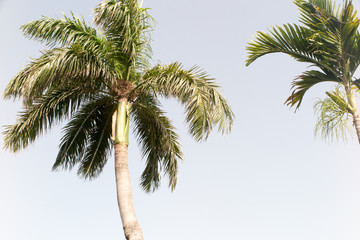 Coconut tree and blue sky in summer beach