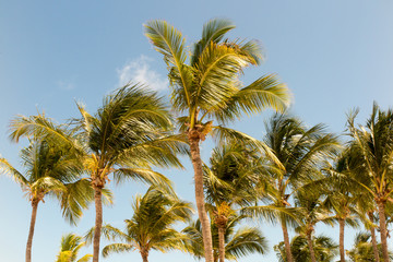 palm trees on the background of a beautiful sunlight