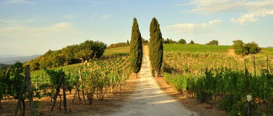 Allee mit Säulenzypressen durch einen Weinberg im Chianti