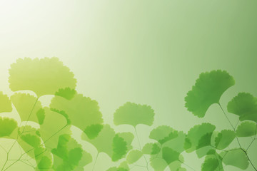 Abstract Illustration of nature in summer of colorful background with fern leaves silhouette.