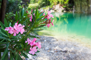 pink flowers over mountain river background