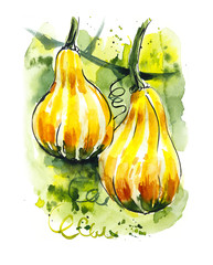 Two pumpkin. Watercolor hand drawn illustration