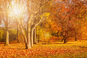 Autumn city park with fallen yellow leaves