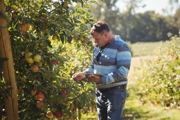 Farmer using digital tablet in apple orchard