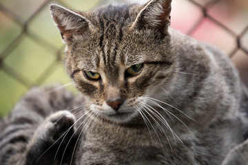 pussy friend cat