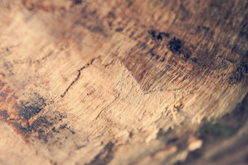 Close shot of a piece of firewood showing texture and grain. Shallow depth of field.