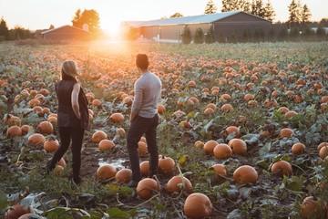 Couple standing in pumpkin field