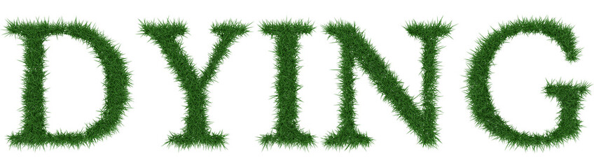 Dying - 3D rendering fresh Grass letters isolated on whhite background.