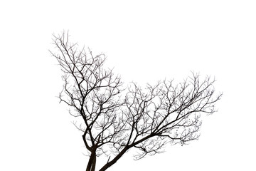 leafless branch or dead tree isolated on white background.