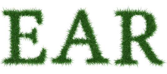 Ear - 3D rendering fresh Grass letters isolated on whhite background.