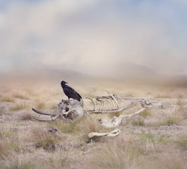 Vulture perches on Elephant Skeleton