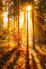 Wall Mural - Goldener Herbstwald im Sonnenlicht