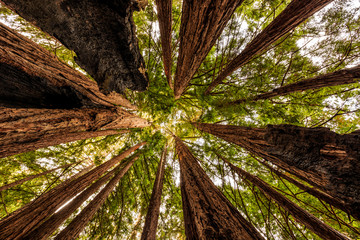 Fall Morning, Redwood Forest, Big Sur