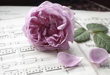 Alte Musiknoten mit erblühter Rose (Rosaceae), Musik zu Trauerfeiern
