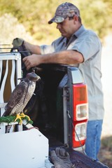 Falcon standing by car while sparrowhawk perching on cage