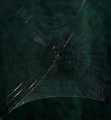 Spiderweb glitters at sunrise.