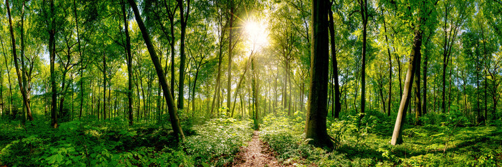 Path in the forest lit by golden sun rays