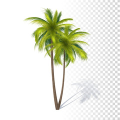 Green Coconut Palm